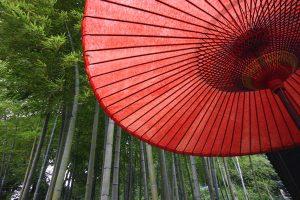 Bambusmitschirm